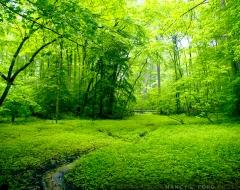 """""""Sea of Green"""""""