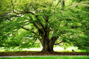 Crow & Tree